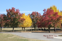 All the colors of fall...