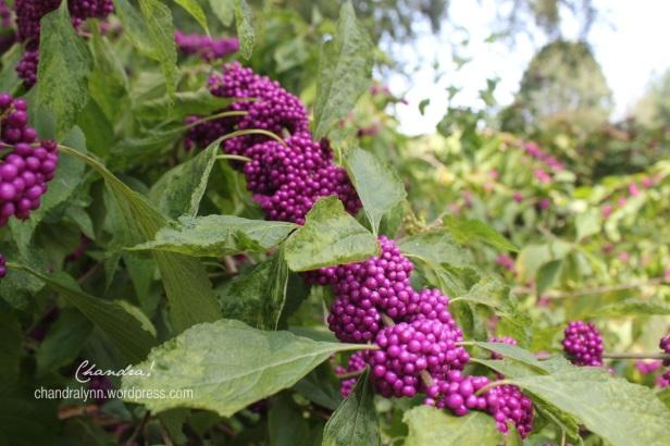 Huntsville Botanical Gardens, 2012