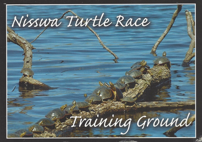 "Nisswa Minnesota Turtle Races:  ""Only a chosen few of these hardworking racing turtles willhave what it takes to make the cut and participate for their chance at glory in Nisswa's premiere summertime event."""