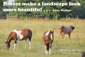 """Horses make a landscape look more beautiful""--Alice Walker. Photo by Chandralynn!"