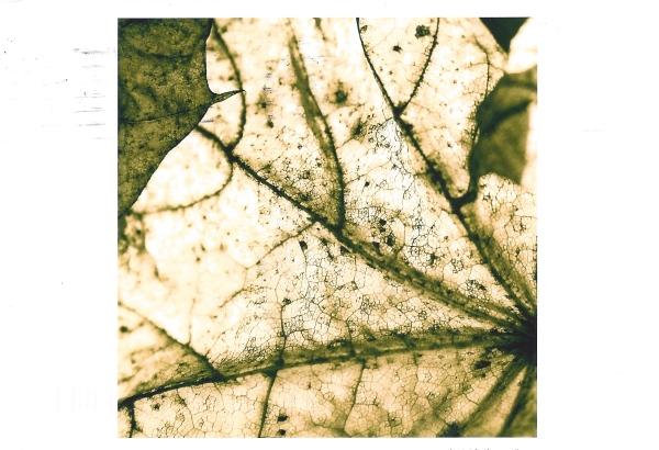 """""""Fall"""" by Jen Erbe"""
