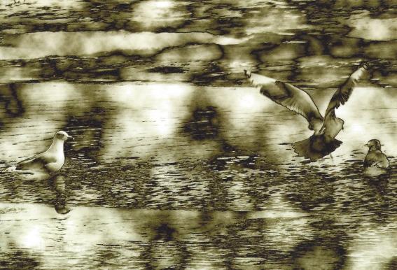 """Seagulls"" by Patricia Lyon Surrey"