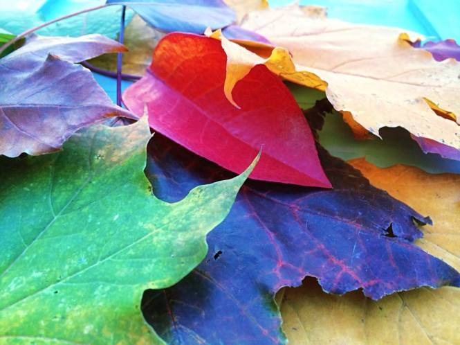 """""""Patty's Fallen Leaves"""" by Patty aka Cakers"""