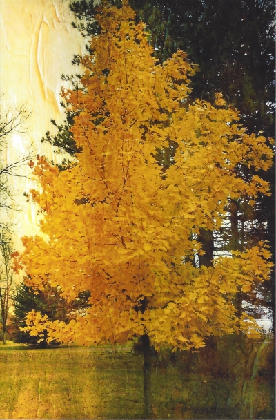 """Vibrant Maple,"" by Diane, known as ""midteacher"" on swap-bot"
