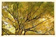 Shades of Fall Yellow-Green