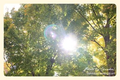 Shades of Fall Green