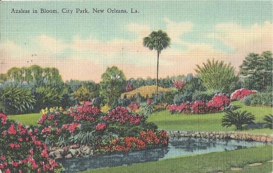 Azaeleas in Bloom.  City Park, New Orleans, La.