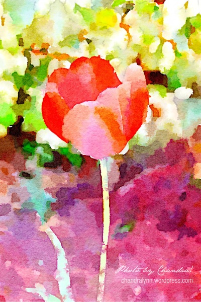 """A Tulip for You,"" Huntsville, Alabama"