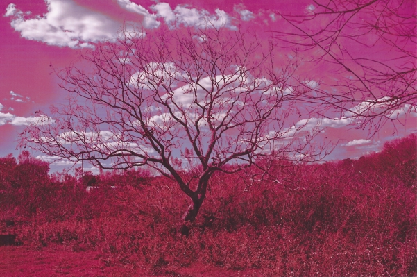 Tree in Monochrome by Zoey