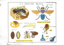 "Week 50: From Eric (USA). Illustration by Philippe Rossignal. ""Blue Fly,"" 1954."