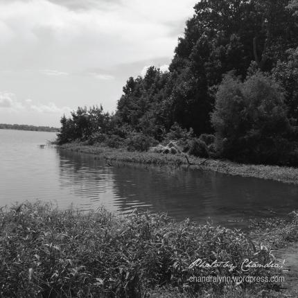 Wheeler Lake in Black and White