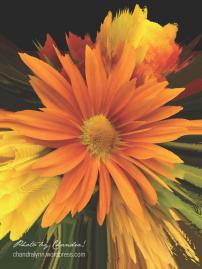 Autumn Flower: Ray 2