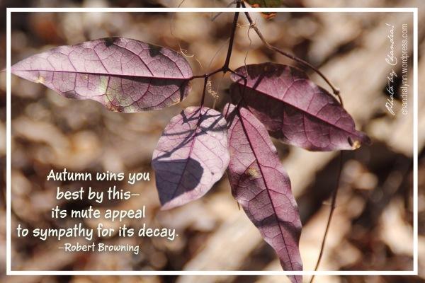 Autumn's Sympathy