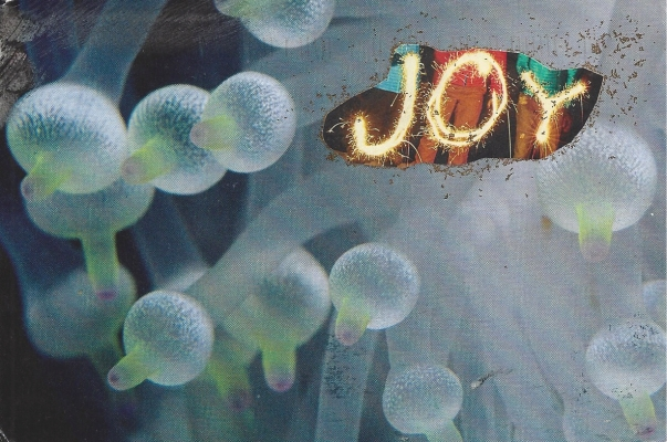 """Joy for the Anemones,"" Photo by Christine B."