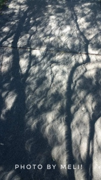 Eclipse Shadows II by Meli D.