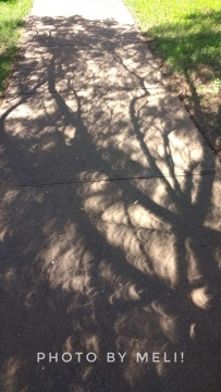 Eclipse Shadows I by Meli D.