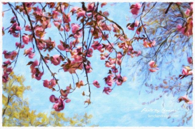 Impressionist Cherry Blossoms