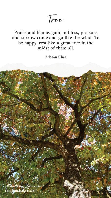 Tree Quote-1