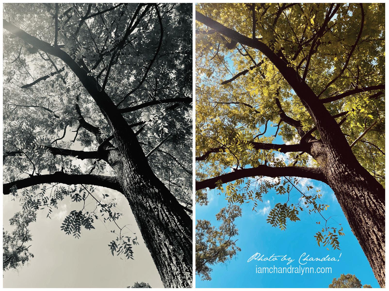 Double Trees