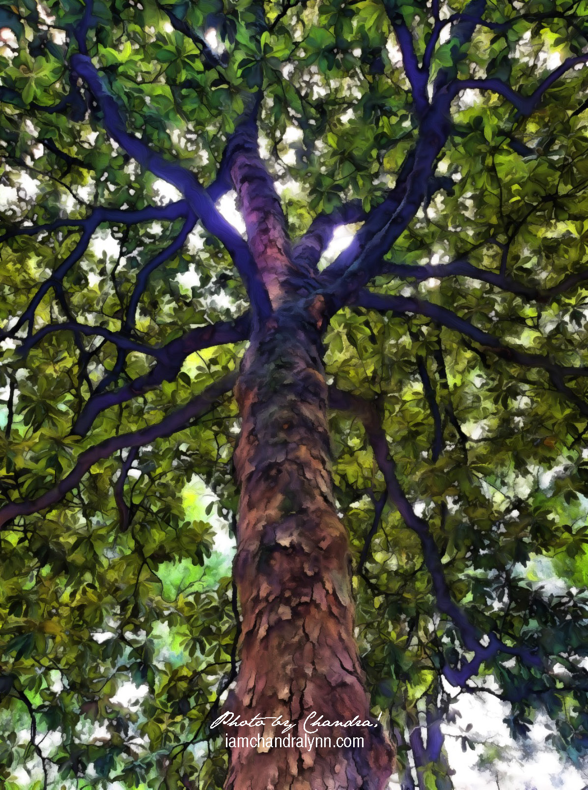 Inside the Magnolia