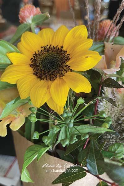 Apples-6 Sunflowers
